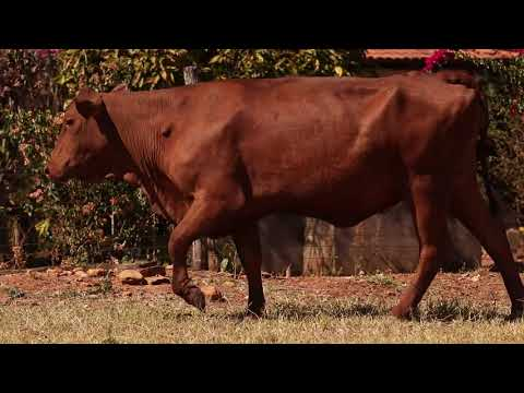 LOTE 41   FLCH 0009