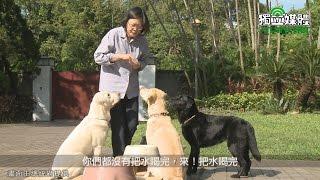 蔡英文與三隻退役導盲犬官邸生活曝光