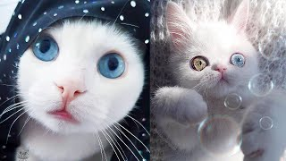 FUNNY ANİMALS AND CUTE PETS COMPİLATİON #20- Little Friends