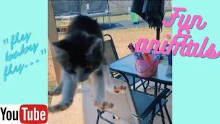 Funny animal video Collection 20 Animal pictures Приколы с животными смешные котики собаки