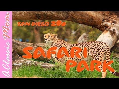 Sandiego Zoo Safari Park Travel Tips | TRAVEL VLOG | Adventure Travel | Wildlife |  A Classic Mom
