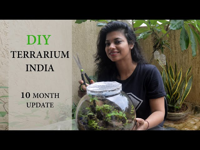 Terrarium Diy India Update Video I Miniature Garden In Glass Bowl I