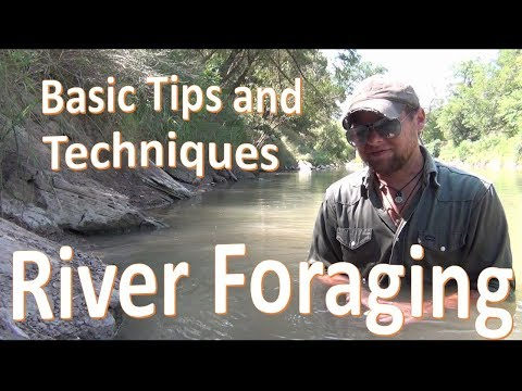 River Foraging -Finding Food at the Water-