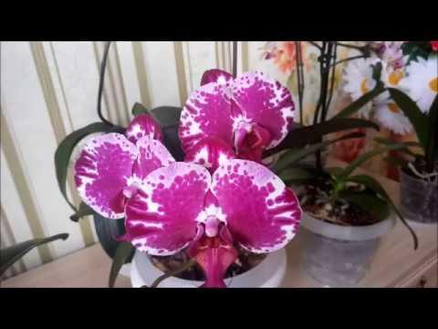 горшки с автополивом для орхидей...полив...