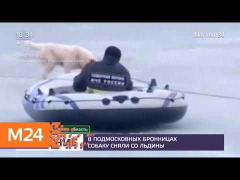 В подмосковных Бронницах собаку сняли со льдины - Москва 24