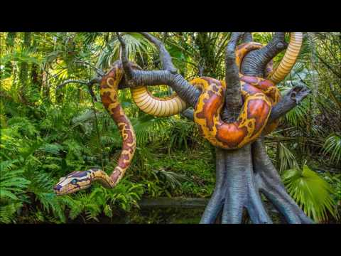 Disneyland History Today episode 7 - Jungle Cruise