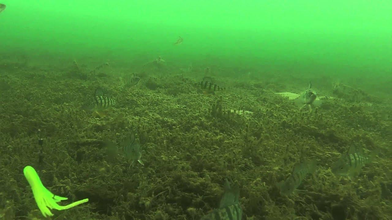 Ice Fishing Underwater View-Lake Simcoe, Cooks Bay Jan ...