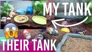 Petcos WRONG Hermit Crab Tank Setup ( VS My Hermit Crab Tank Tour)