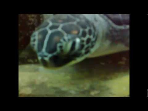 Alexandria Marine Aquarium, NIOF