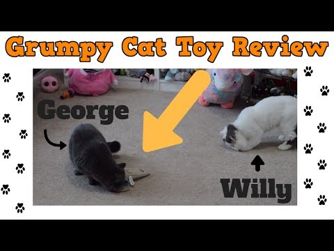 Grumpy Cat Toy Video Review - Cats Playing With Toys
