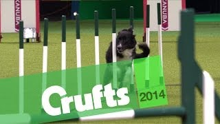 Agility   Jumping   Large Dogs Winner   Crufts 2014