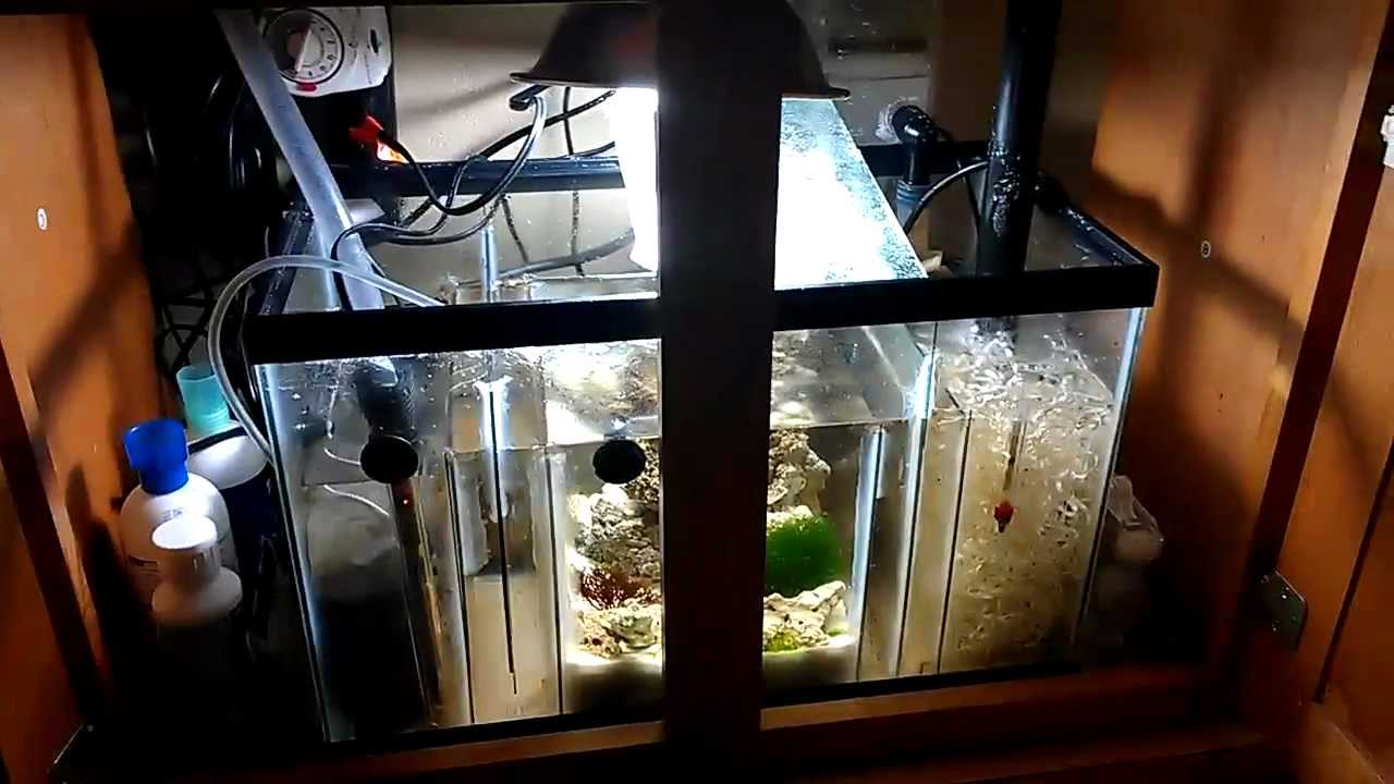 29 Gallon Salt Water Fish Tank Update 6 Sump Tank And Pvc