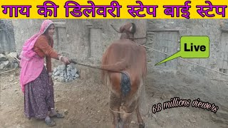 Donkey & Cow Meeting Frist Time 2019