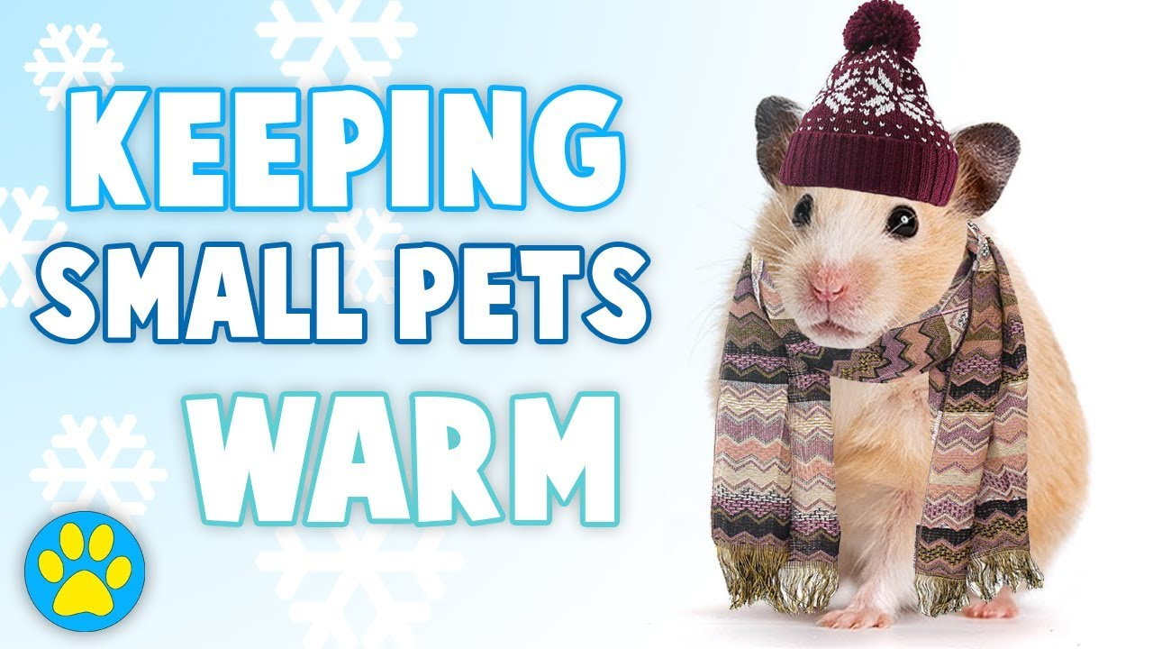 a648a3494e7 KEEPING HAMSTERS WARM IN THE WINTER - YouTube