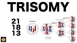 Download Video Trisomy (21, 18, and 13) & Nondisjunction Genetics MP3 3GP MP4