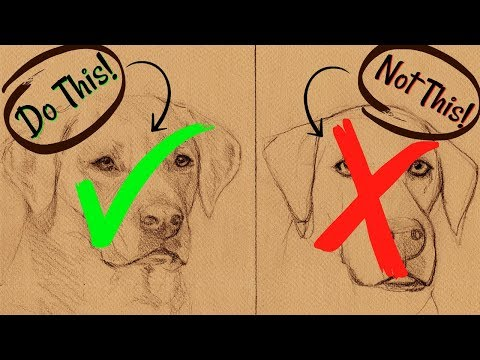 sketching-animals:-how-to-draw-a-realistic-dog
