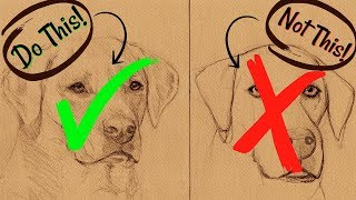Sketching Animals: How to Draw a Realistic Dog