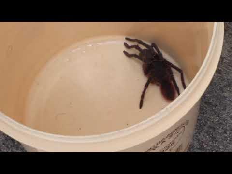 meu medo da caranguejeira