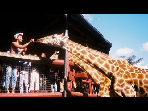 My trip to Nairobi!
