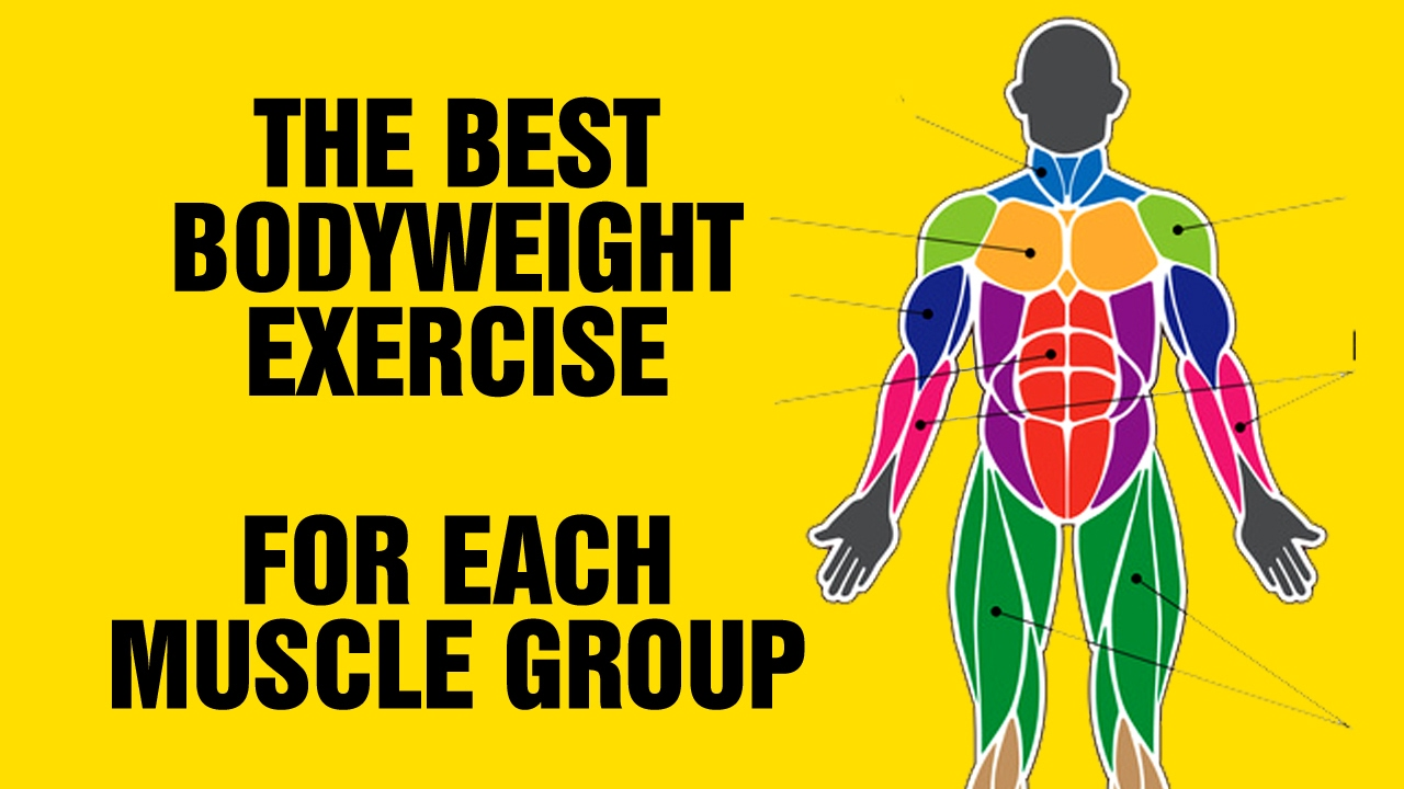 muscle and exercise Toggle navigation tools calorie calculator macro calculator one rep max calculator  male female.