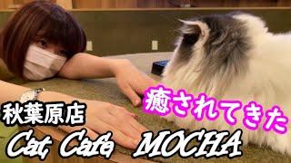 【猫カフェ】22歳女子大生YouTuberいけちゃんが猫に癒されてきた【MOCHA秋葉原店】