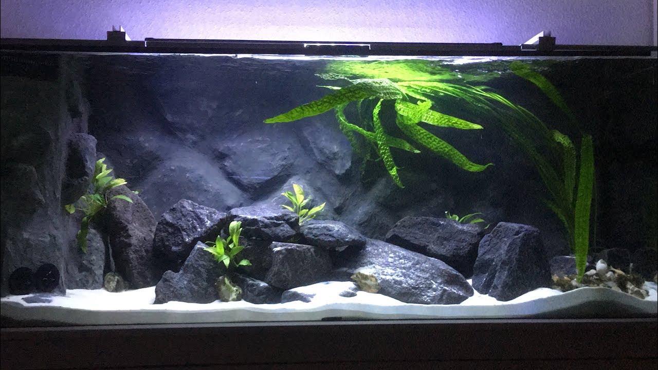 tanganjika aquarium gesellschaftsbecken 540 liter youtube. Black Bedroom Furniture Sets. Home Design Ideas