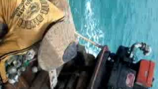 nelayan tripang bulat gebang cirebon