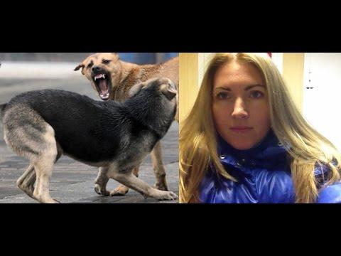 Бешеная собака на Кировой, отзывы и фото итальянских