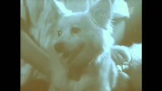 Белка и Стрелка - Мегаполис (видео)(Помогайте собакам и всем животным., 2011-07-14T18:42:07.000Z)