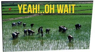 Tour Group Offered Vacation in NK Rice Fields ft. DavidSoComedy & Gina Darling