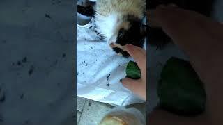 Ми-ми-ми мишные  новорождённые котята которые родились сегодня