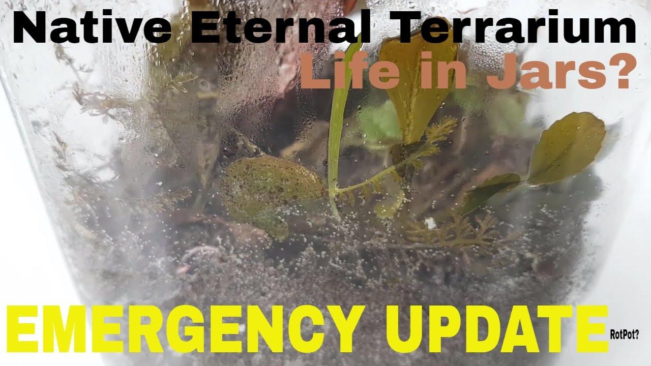 Emergency Update A Native Eternal Terrarium Rotting Plants