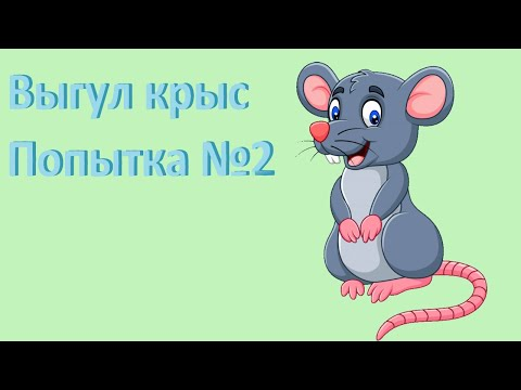 Выгул крыс.  Как отучить крысу кусаться?