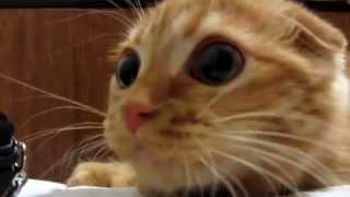 Эти милые и большие глаза у рыжего котенка очаровывают / Домашние любимцы / Funny animals 2015