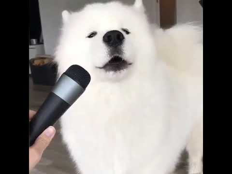 Check out this singing dog! 🐶🐶🐶
