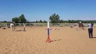 Обучение верховой езде. Эстафета. Шаг. Первые этапы подготовки к конному челленджу для детей.