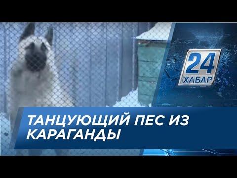 Танцующий пес из Караганды набрал в интернете 2,5 млн. просмотров