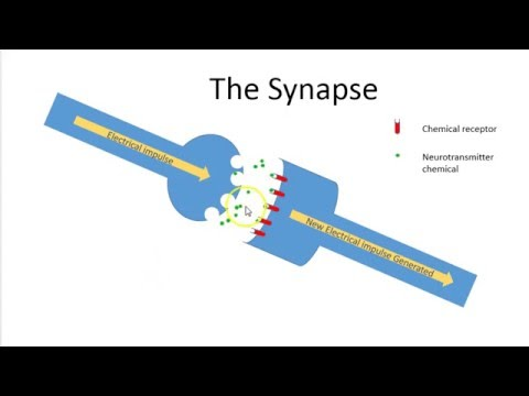 Gcse Synapse Youtube