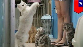 Kobieta ratuje zwierzęta z ulicy i ma już w domu 14 kotów i 3 psy