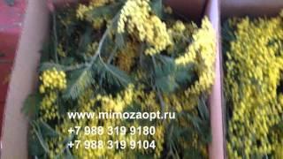 видео купить тюльпаны в москве