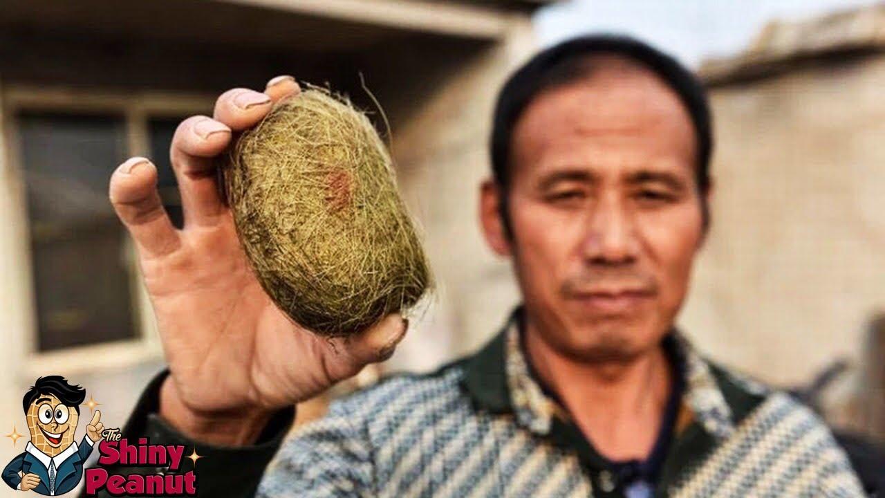 Batu Empedu Babi 8 Miliar! 8 Sisa Hewan Ini Harganya Selangit