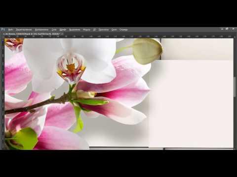 Фотообои  цветы 3d 550х250