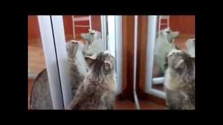 Кошка Маруся. Красивый кошачий конкур *_* 3 часть