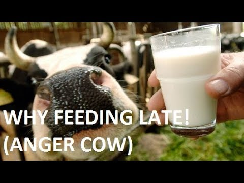 Livestock farming in 21st century