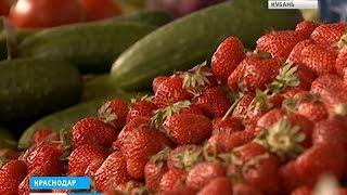 Цена за килограмм кубанской клубники может подняться до 200 рублей