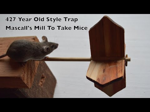 472 Year Old Style Mouse Trap In Action - Mascall's Mill To Take Mice