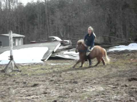 Breaking jaba cruel pony training