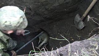 Живоотлов барсука из норы