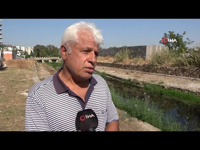Antalya'da Deredeki Balık Ölümlerinde Kimyasal Madde İhtimali