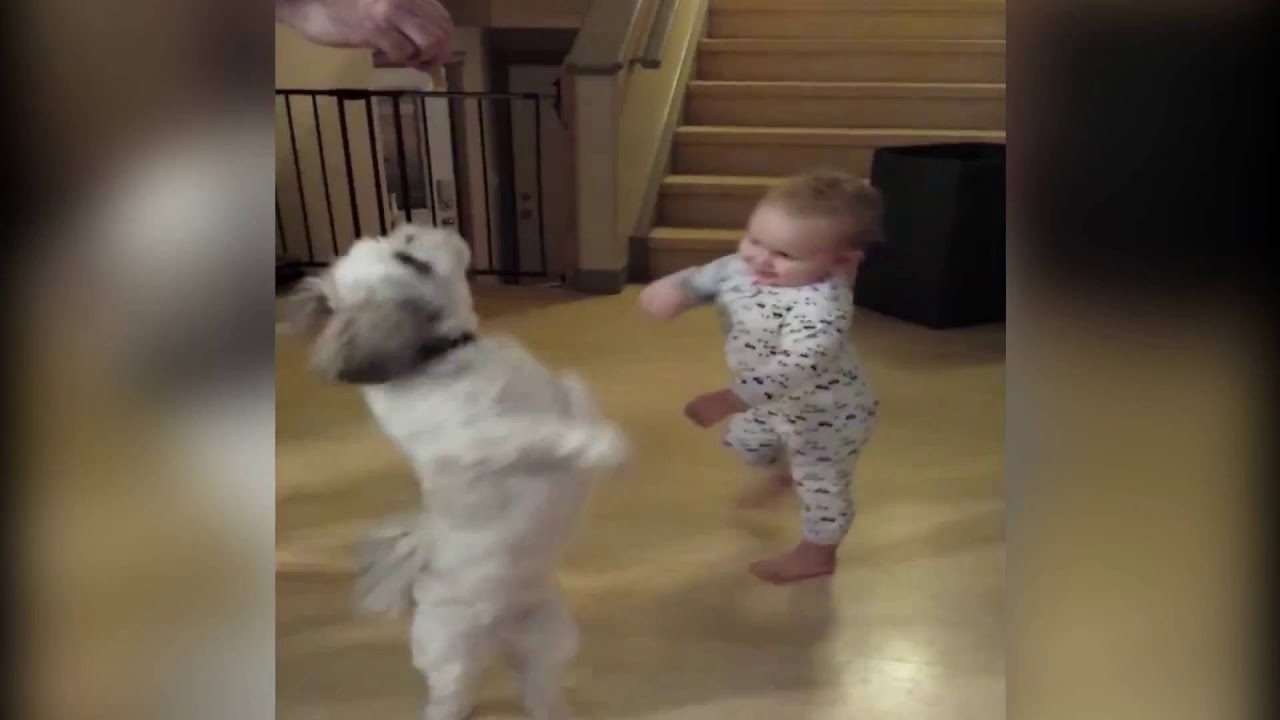 Baby Copies Dog Video